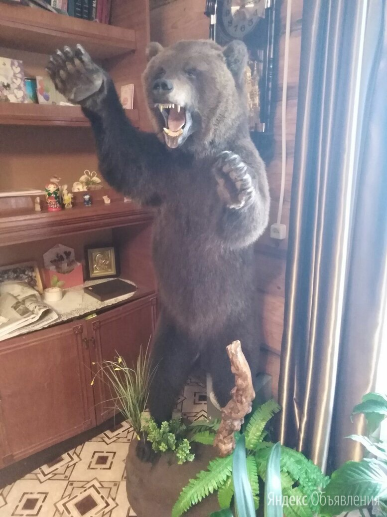 Чучело медведя, ковёр  по цене 100₽ - Рога, шкуры, чучела животных, фото 0