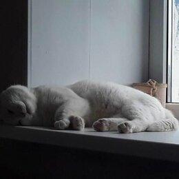 Кошки - Отдам даром кота, 0