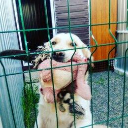 Груминг и уход - Передержка собак, 0