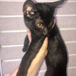 Кошки - Чёрный кот, 0
