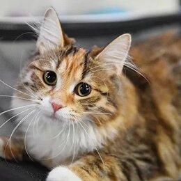Кошки - Бобтейлы. Котята. Готовы к переезду, 0