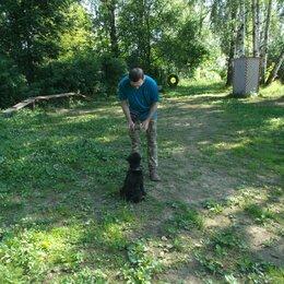Услуги для животных - Дрессировка и воспитание собак, 0