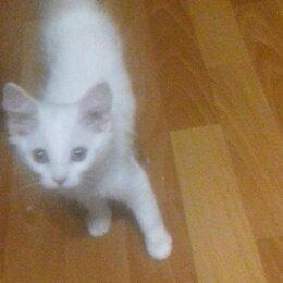 Кошки - Отдам даром котенка, 0