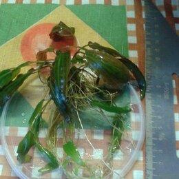 Растения для аквариумов и террариумов - растение для аквариума , 0