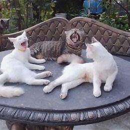Животные - Собаки, 0