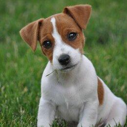 Услуги для животных - Выгульщик собак, 0