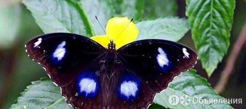 Живые Тропические Бабочки по цене 500₽ - Аквариумные рыбки, фото 0