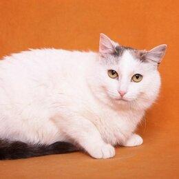 Кошки - Разговорчивая Белоснежка Катунь - кошка в добрые…, 0