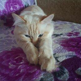 Кошки - Игривый кот, 0