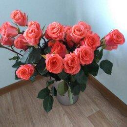 Цветы, букеты, композиции - Розы, 0