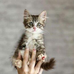 Кошки - Котёнок-Совенок ищет дом, 0