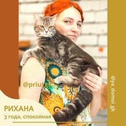 Кошки - Кошка Рихана из приюта, 0