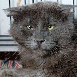 Кошки - Солидный котофей Леонтий, 0