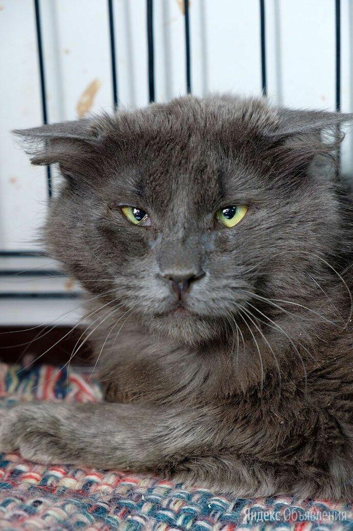 Солидный котофей Леонтий по цене даром - Кошки, фото 0