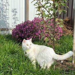 Кошки - Белая турецкая ангора кошка, 0