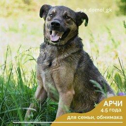 Собаки - Арчи, 0