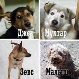 Работа с животными - Собачий миниприют, 0