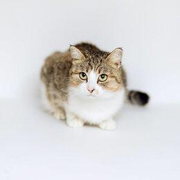 Кошки - Кошечка Нюша ищет семью. Готова к переезду, 0