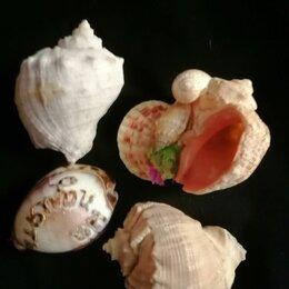 Декорации для аквариумов и террариумов - Ракушки мурекс хаустелиум, 0