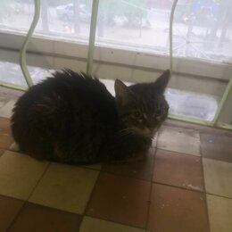 Животные - Даром Кошка, 0