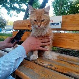 Животные - Найден пушистый рыжий кот очень добрый и ласковый ему на вид 2-3 г. Ищем хозяина, 0