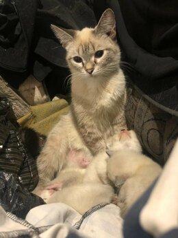 Животные - Котята в добрые руки, 0