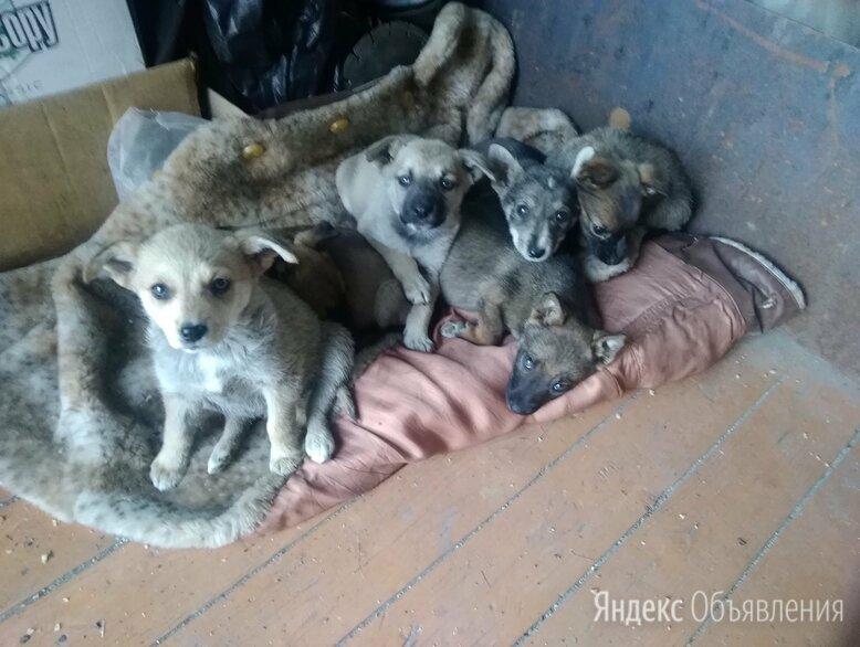 Пристраиваются щенки  по цене даром - Животные, фото 0