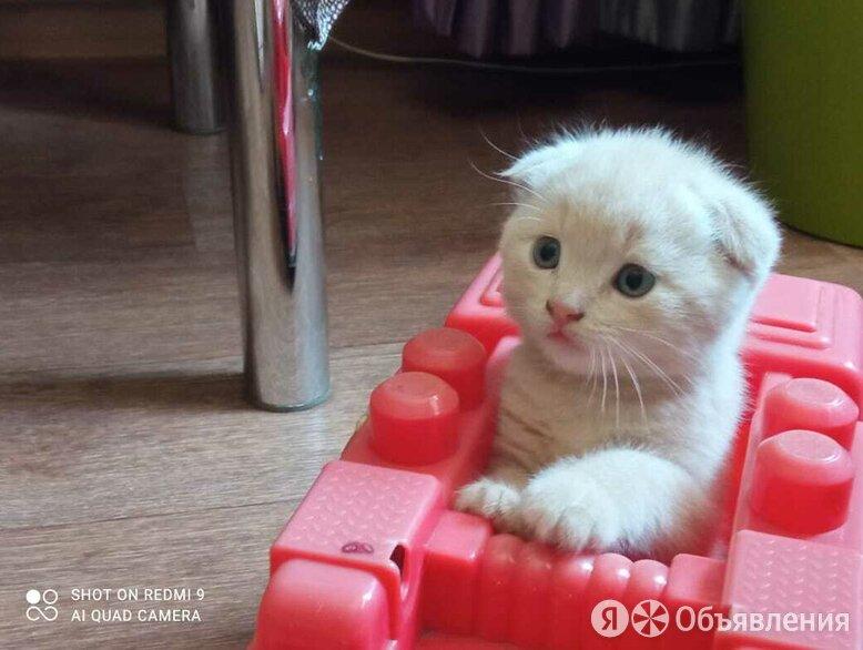 Недорого, за 1000 рублей продадим полутора месячного котика по цене 1000₽ - Кошки, фото 0