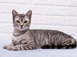 Кошки - кот Лемур, 0
