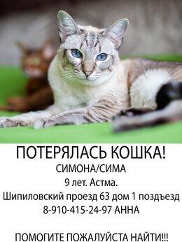 Животные - Потерялась кошка шипиловский проезд 63к1, 0