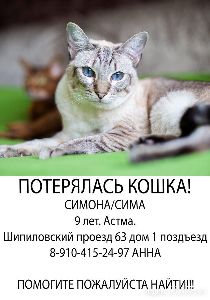 Потерялась кошка шипиловский проезд 63к1 по цене не указана - Животные, фото 0