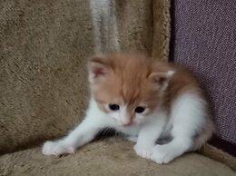 Кошки - 2 кота и кошечка ищут хозяев, 0