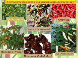 Семена - Семена Сортовых ПЕРЦЕВ для выращивания в…, 0