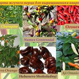 Семена - Семена Сортовых ПЕРЦЕВ для выращивания в ДОМАШНИХ условиях/БАЛКОН/Квартира, 0