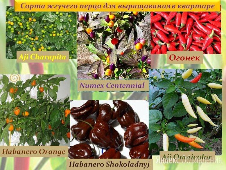 Семена Сортовых ПЕРЦЕВ для выращивания в ДОМАШНИХ условиях/БАЛКОН/Квартира по цене 50₽ - Семена, фото 0
