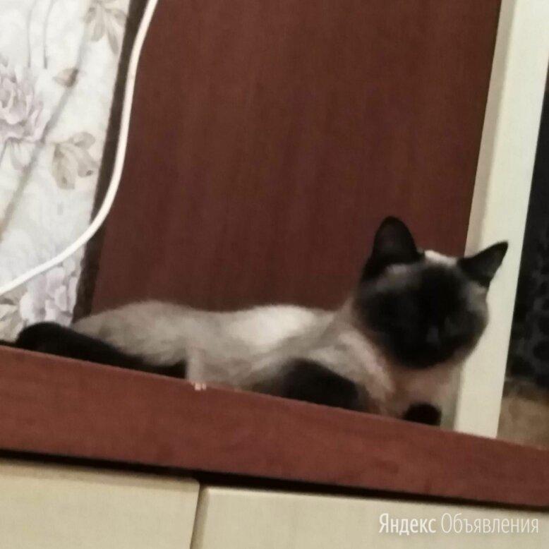 Животные  по цене даром - Кошки, фото 0