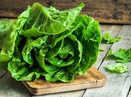 Разнорабочий - Упаковщик салатного листа , 0