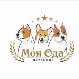 Собаки - Племенной питомник  Моя Ода амстафф стафф стаффорд ам.стафф, 0
