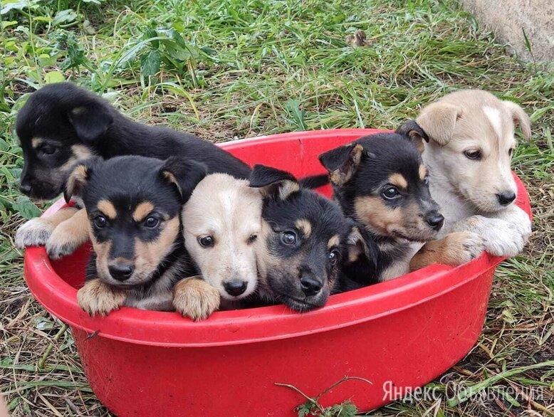 Беспородная собака по цене даром - Животные, фото 0