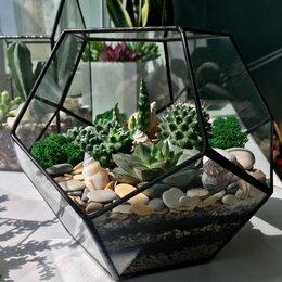 Комнатные растения - Флорариум геометрический, террариум , 0
