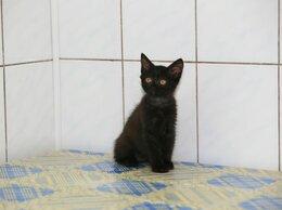Кошки - БАГИРА, 0