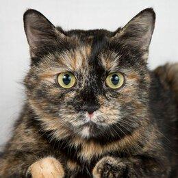 Кошки - Искорка - тёплая и уютная кошка в добрые руки , 0