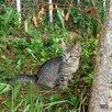 Животное по цене даром - Кошки, фото 2