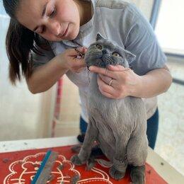 Груминг и уход - Стрижка кошек, 0