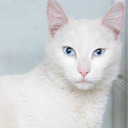 Кошки - Белоснежная красавица Неля, 0