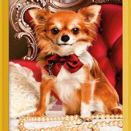 Собаки - Чихуахуа Артикул : L 529, 0
