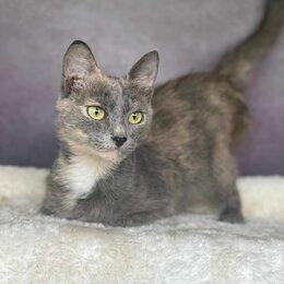 Кошки - Кошка Тося, 0