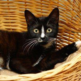 Кошки - Ласковая кошка Агата (6 мес.) ищет семью, 0