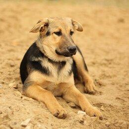 Собаки - Щенок с идеальным характером, 0
