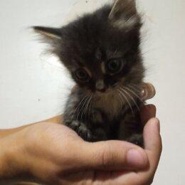 Кошки - Отдаем котят в добрые руки, 0
